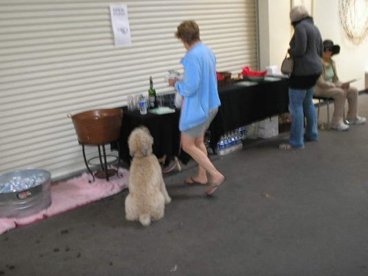 Refreshments and patient poodle.