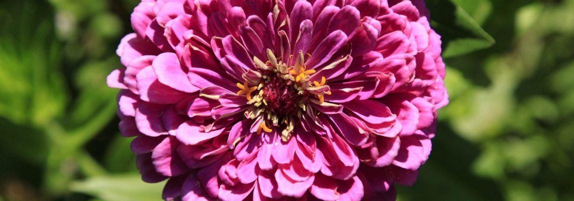 Dean Triolo Fine Art Descanso Gardens